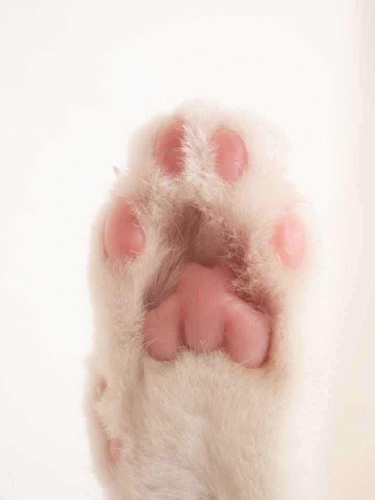 超オバカ愛猫・・・クーちゃんの遺言